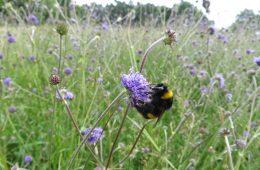 Image - John Muir Pollinator Way